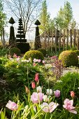 Geometric and figurative topiary and pastel tulips in Tuinzondernaam gardens