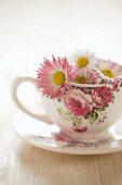 Daisies in floral teacup