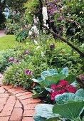 Cabbages in flowering garden