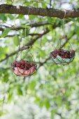Zwei Drahtkörbe mit Kirschen hängen an einem Ast