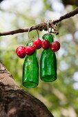 Grüne Glasflaschen und Kirschen hängen an einem Zweig