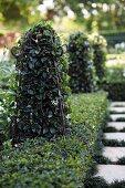 Jasmine growing up vintage-style obelisks planted amongst box bushes