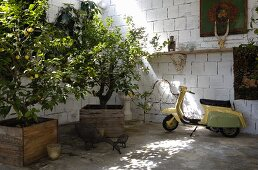 Vespa and lemon tree in wooden planter in rustic surroundings