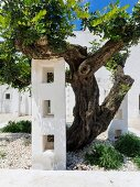 Masonry column with apertures below gnarled tree