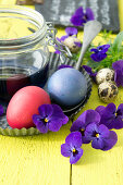 Easter eggs dyed red and blue and violas