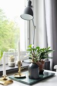 Candlesticks, plants and anglepoise lamp in front of window