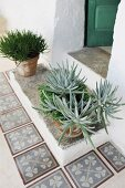 Potted succulents on Mediterranean front step with tiled surround