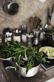 Leafy vegetables in metal colander in kitchen