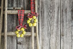 Two wreaths of perry pears hung from ladder on tartan ribbons