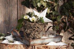 Pflanztopf umwickelt mit Flechten und bepflanzt mit Christrose