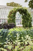 Climber-covered arch in vegetable patch and greenhouse in background