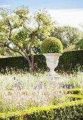 Box ball planted in urn in flowering garden with clipped hedges and tree