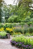 Various flowering perennials in summery garden
