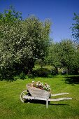 Wooden wheelbarrow decorated with potted plants on green lawn in flowering orchard