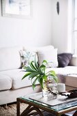 Palm tree in glass vase on rattan coffee table in front of white corner sofa