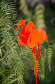 Ein roter Deko-Stecker aus Metall in Flamingoform im Garten