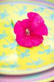 Pink petunia flower on ´plate with blue and yellow pattern of palm trees