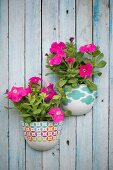 Pink petunias in planters mounted on board wall