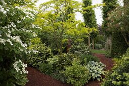 Green shrubs and trees lining mulched patch in well-tended summer garden