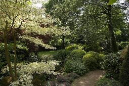 Densely planted shrubs and trees lining path in summery garden