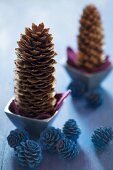 Pine cones in tiny bowls and larch cones painted blue