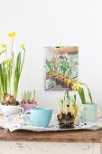 Yellow-flowering narcissus planted in pastel teacups
