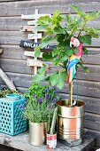 Lavender and small tree planted in tin cans and ceramic candle lantern on wooden bench against wooden wall