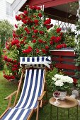 Blue and white striped deckchair and side table in front of red rose climbing over red veranda in garden