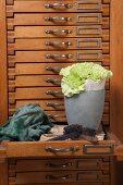 Grüne Nelken in mit Buchseiten ausgekleidetem grauem Übertopf vor altem Schubladenschrank