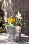 Easter eggs used as vases for narcissus in small zinc bucket