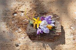 Zartes Blumensträußchen mit Krokussen auf Baumrinde