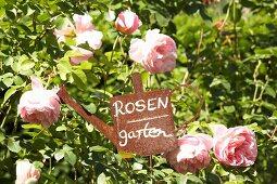 Vintage rose-garden sign amongst pink scented roses