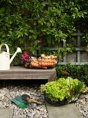 Freshly picked vegetables in wire basket on wooden bench and terrace floor