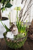 Easter nest of orchids and grape hyacinths in metal basket