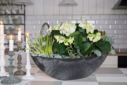 Bowl planted with white hydrangea and grape hyacinths