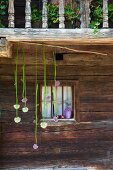 Alliums hung in front of lattice window in façade of rustic farmhouse