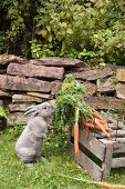 Carrots in wire basket with rabbit sniffing the carrot leaves