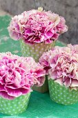 Pink carnations in green polka-dot muffin cases