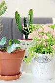 Arrangement of various houseplants in terracotta and decorative pots