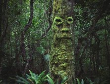 Moss-covered tree with face in murky woods