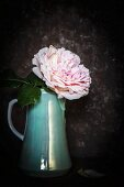 Double rose in vintage coffee pot