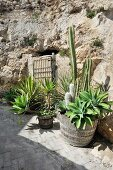 Mediterranean plants in front of rustic rock wall