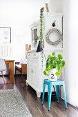 Dekorative Grünpflanze in weißer Papiertüte auf hellblauem Hocker vor nostalgischem Küchenbuffet