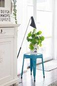 Dekorative Grünpflanze in weißem Säckchen auf hellblauem Klassiker-Hocker vor Fenstertür