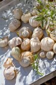 Washed snail shells drying on aluminium tray outside