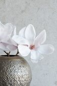 Delicate magnolia flowers in metal vase