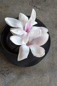 White magnolia flowers in black bowl
