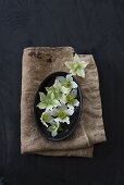 White hellebores on black tray and hessian
