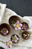 Pink hellebores in brown bowls and snail shells on linen cloth