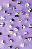 Violas on lilac surface
